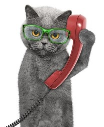 Contact Catty